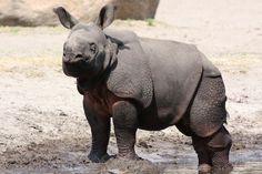 كيف يتم تزاوج وحيد القرن