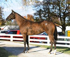 Quiet Giant 2007 bay mare by Giant's Causeway, out of Quiet Dance