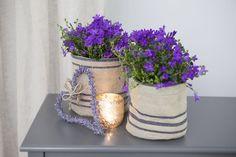 Campanula i grow-in selvvanningsbag Planter Pots
