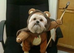 Pet Owners Who Are Doing it Right, Ewok costume on a shitzu hahahaaaaa