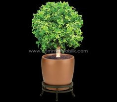 Decorative Boxwood Balls Preserved Boxwood Ball Topiary  My Decorative Advise & Ideas