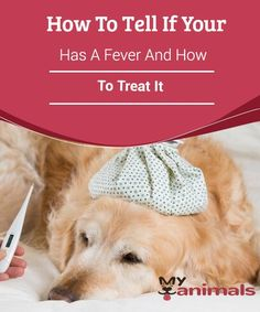 Animals don't have words to tell us something is wrong, so it's important to know the potential signs that your dog has a fever, and how to treat it. Dog Runs, Dog Treats, Lions, Fur Babies, Pets, Merlin, Tricks, Animals, Doggies