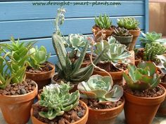 Succulent House Plant display