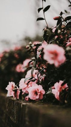 Flowers Photography Wallpaper Phone Wallpapers New Ideas Tumblr Wallpaper, Wallpaper Backgrounds, Iphone Wallpaper, Wallpaper Makeup, Smoke Wallpaper, Amazing Wallpaper, Star Wallpaper, Nature Wallpaper, Pink Flowers