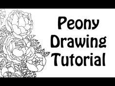 Peony Drawing Tutorial - YouTube