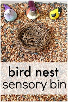 Bird Nest Sensory Bin - Fantastic Fun & Learning - Sensory Table Fun - Learn about birds and engage in sensory play with this bird nest sensory bin for your bird theme th - Sensory Tubs, Sensory Boxes, Sensory Play, Sensory Diet, Toddler Sensory Bins, Toddler Preschool, Toddler Activities, Preschool Activities, Toddler Snacks
