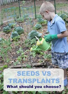Gardening with kids is a ton of fun. But when should you chose seeds? When should you choose transplants? Benefits to both seeds and transplants. Planting Vegetables, Growing Vegetables, Vegetable Garden, Best Herbs To Grow, Preschool Garden, Buy Seeds, Bush Beans, Garden Care, Raised Garden Beds