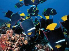 We always see such bright and colorful fish on our Galapagos Dive trips