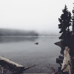 // what place are you anticipating to go to this summer?? For me it's Mowich Lake. This place I didn't get a lot of time to explore but when I get another chance I'm gonna go bonkers!! //