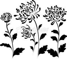 chrysanthemum - Google-haku