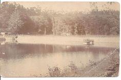 REAL PHOTO Picture Postcard K LTD MARK POND FARM ROAD BULLOCK CART V.N.CO.OOTY