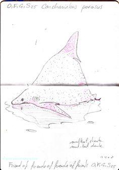 Carnet Bleu: Encyclopedia of…shark, vol.XII p6, pencil on paper by Pascal Lecocq, The Painter of Blue ®, 7x5, 2013, lec888ep6, public coll. Brooklyn Art Libr...