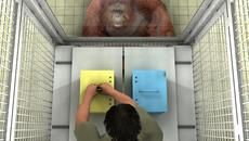Great Apes Understand When Humans Are Wrong