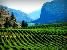 Kelowna - British Columbia wine country Vancouver City, Vancouver Island, Canadian Travel, Canadian Rockies, Places To Travel, Places To Go, Western Canada, O Canada, True North
