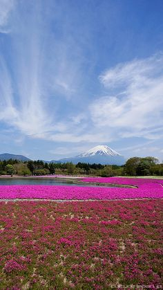 Fancy Mount Fuji by Danny Choo via Flickr I uve been to Fuji san