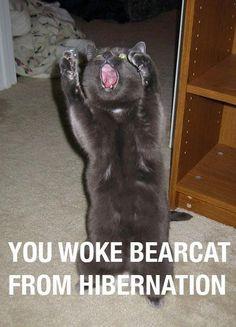 bearcat Haha
