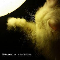 estamos tan agustito. el cazador #estamostanagustito #funny #cute
