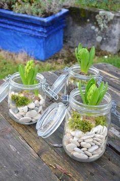 8 plantes repérées sur Pinterest pour pimper votre déco