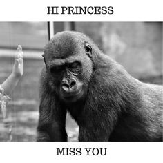 I miss you meme - Betameme I Miss You Meme, Interesting News, Special Person, Animal Welfare, I Missed, Feel Good, Cute Animals, Memes, Zoos