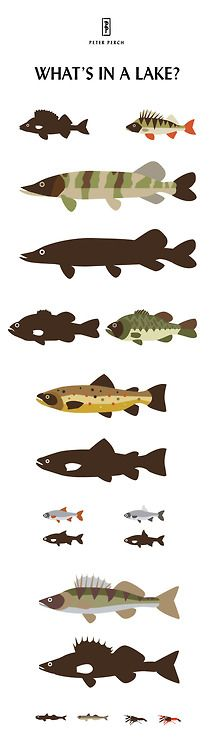 What's in a lake? Illustrated fish by Peter Perch.