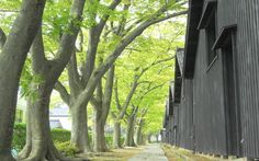 山形県 酒田 新緑に佇む山居倉庫 酒田のシンボルである山居倉。百年以上も倉庫を守り続けたケヤキたちがやさしく力強く今も私たちを迎えてくれます。