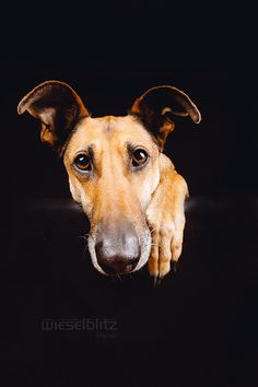 """""""Look into my eyes..."""" by Elke Vogelsang on 500px"""