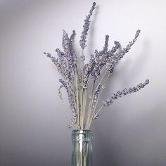 Dry lavender flowers. Notebooks design.
