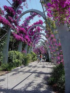 "Nature takes care of us"" Brisbane flower bower, Queensland, Australia photo by: Murfomurf ♥ would love to stroll under those ♥ Brisbane Queensland, Queensland Australia, Western Australia, Australia Travel, Places To Travel, Places To See, Beautiful World, Beautiful Places, Dream Vacations"