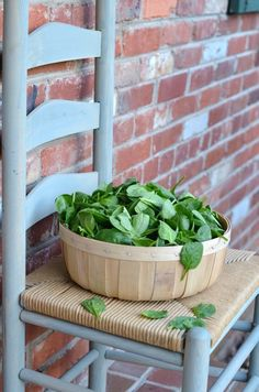 Wordless Wednesday - Baby Spinach