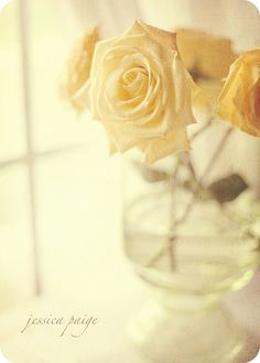 Vase of Yellow Roses on Window Sill - by Jessica Page