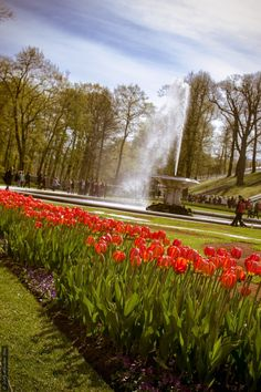 Tulips by Стас Киренков on 500px