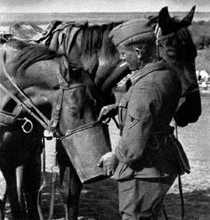 Contrary to popular belief, the German army was not fully motorized when the war started; some 60 percent of its transport depended on horses, tens of thousands of which perished in the battlefield.