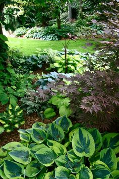 Shade-Garden - Use of Japanese Painted-Fern [Athyrium nipponicum 'Pictum'] and Hosta varieties in the landscape for the woodland effect