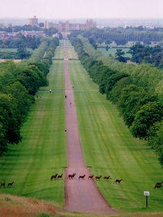 London Landscape Observer: Windsor castle - and Long Walk