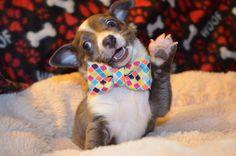 happy birthday meme dog - Google Search