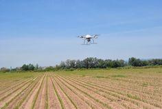 Agriculture : des drones pourraient limiter l'usage des herbicides