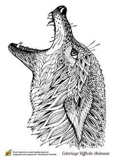 Coloring page of a wolf's head