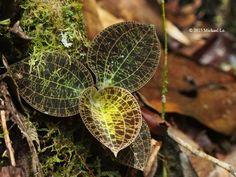 The jungle of Borneo
