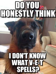 German Shepherds are not only smart...they're also know how to spell!