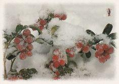 Puolukkaa lumen alla - Huuto.net