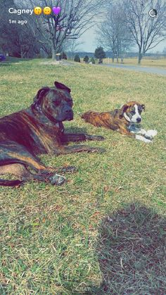 My babies and my horse which didn't get in the picture 😂❤ the left dog is Shelby and the right is Cooper. They r pit bulls!
