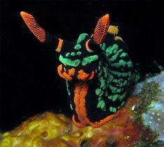 images of sea slugs - Google Search