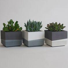 Set of Three Concrete Succulent Planters, Greyscale