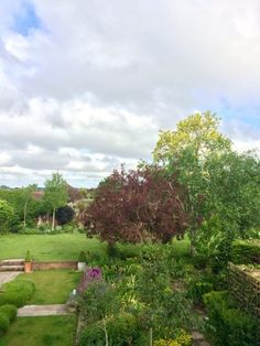 Which garden tree is absolutely perfect for you? - The Middle-Sized Garden Back Gardens, Outdoor Gardens, Low Maintenance Garden Design, Tree Surgeons, Garden Trees, Backyard Trees, Garden Privacy, English Country Gardens, Trees And Shrubs
