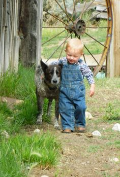 Country Friends anim, country boys, blue heelers, the farm, country life, cattle dogs, friend, little boys, kid