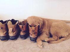 Heel. Good dog! (Photo of Kay D.'s dog Breeze via Instagram: esnowbird)