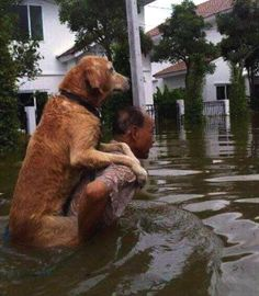 Curiosities: Faith in Humanity Restored