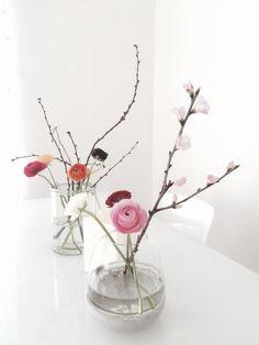 Ranunkeln und Kirschblüten