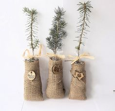 Tree Gift Wedding Favors in Burlap - Personalized Wood Tags - if ever I get married maybe? Burlap Wedding Favors, Christmas Wedding Favors, Winter Wedding Favors, Unique Wedding Favors, Unique Weddings, Wedding Gifts, Wedding Ideas, Geek Wedding Favors, Wedding Things