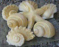 Lovely Decorative Gold And Light Green Seashell And Starfish Soap   Set Of Eight  Shimmery Soaps | Soap Ideas @@@@@@@@@@@@@@ | Pinterest | Starfish, Homemade  Soaps ...